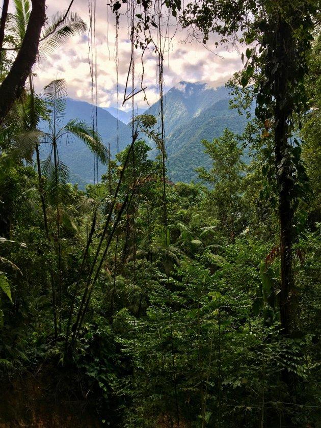 Boswandeling Sierra Nevada