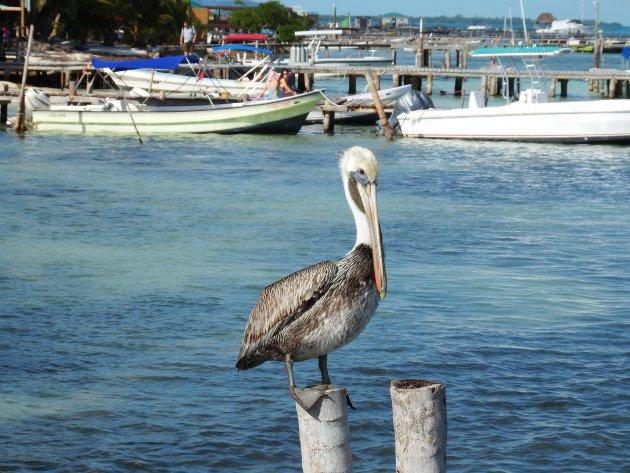 Caye Caulker - Belize - Harry de Pelikaan