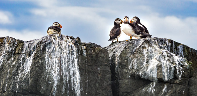 Farne islands: een paradijs voor puffins