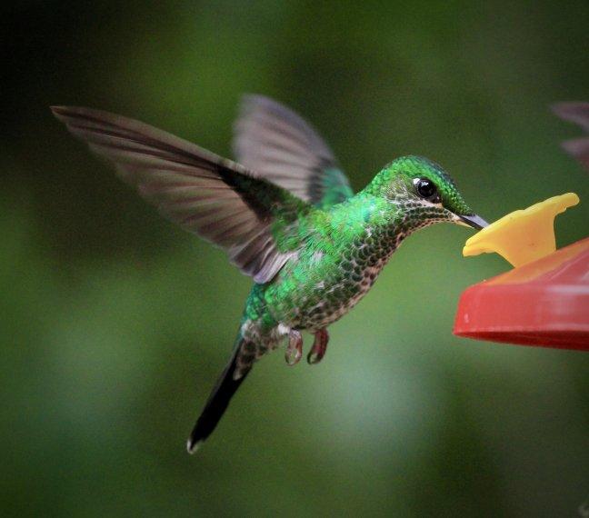 Het vogelrijk Costa Rica 6