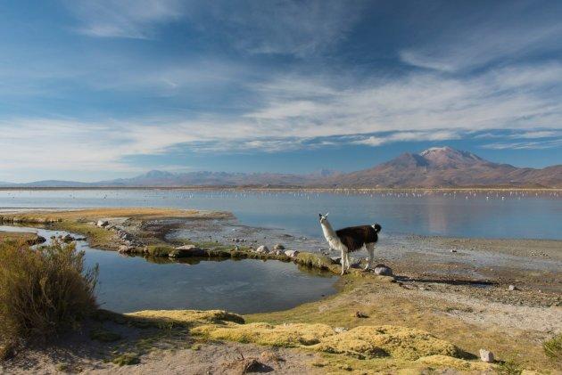 laguna Macaya Bolivia