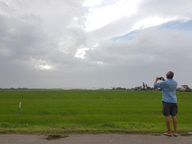 Eindeloze rijstvelden in Nickerie