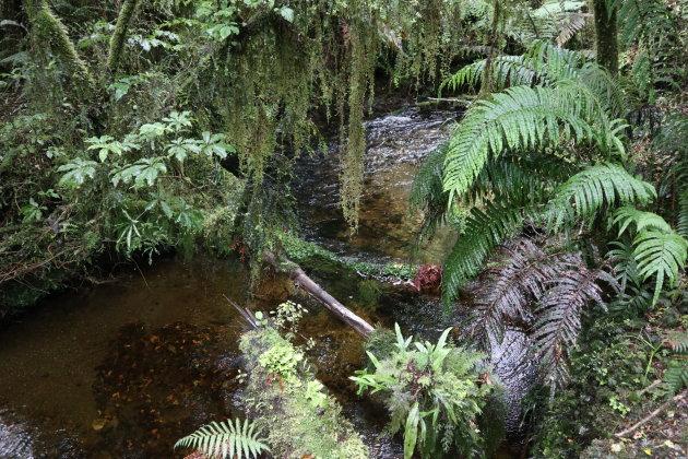 Wandelen in Westland tai poutini national park