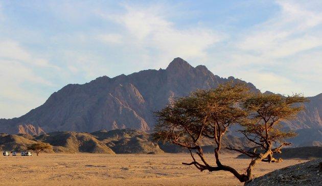 Woestijnrit