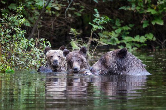 Zag 3 beren .....