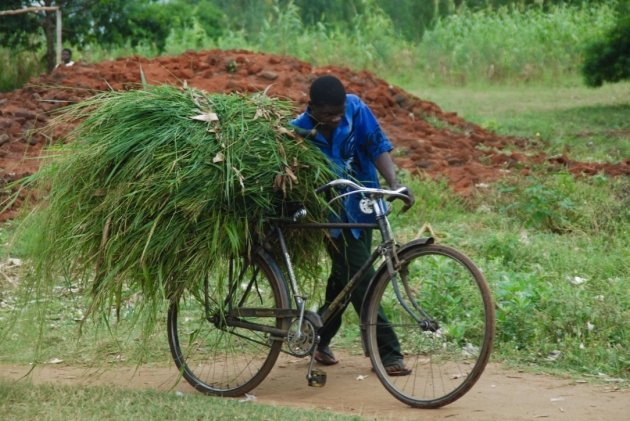 Onderweg in Malawi