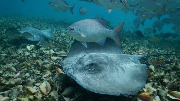 Onderwaterwereld Belize
