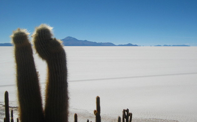 Cactuseiland