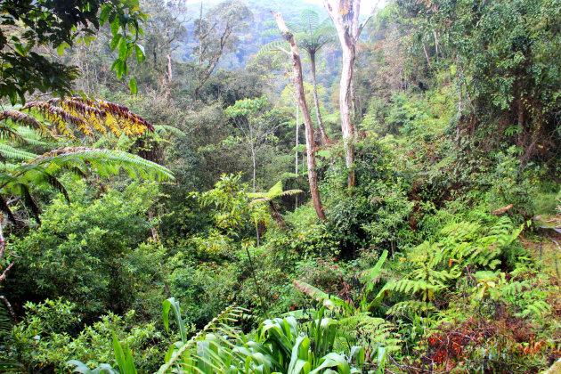 Gratis door het oerwoud
