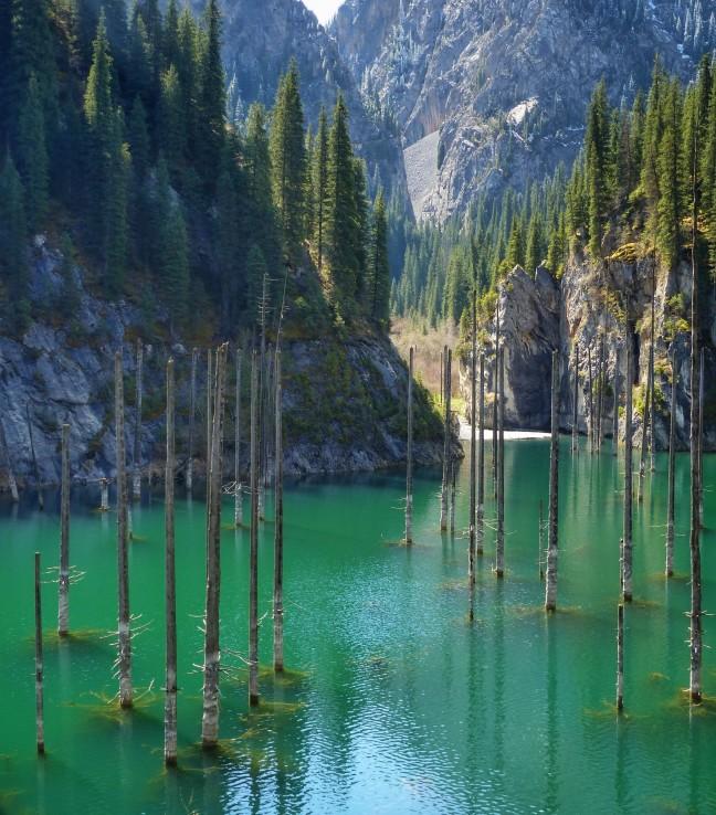 Verdronken bos