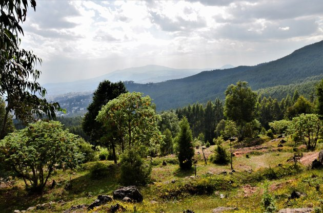 Addis Entoto