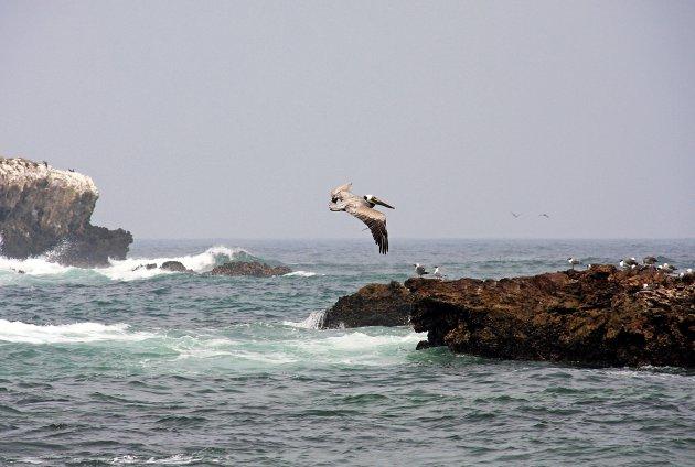 Galapagos?