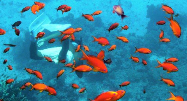 Kleurrijk onderwater landschap