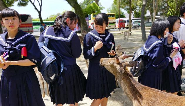 De heilige herten van Nara park