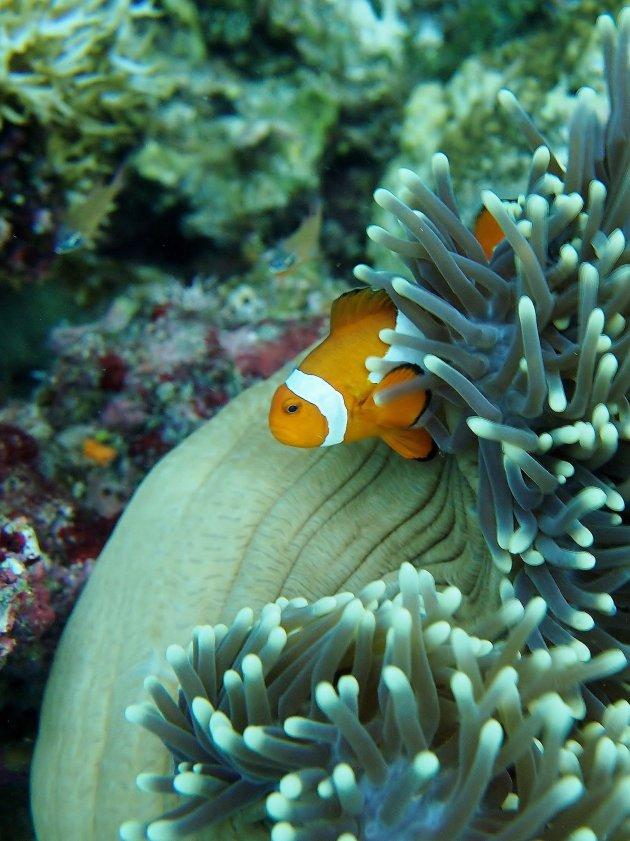 Boze Nemo