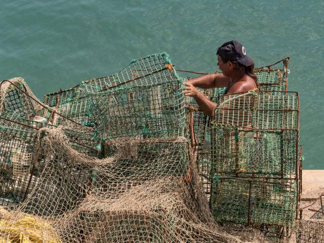 Stoere visser