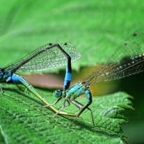 '559571' door Dragonfly