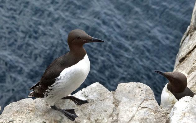 Vogelparadijs in Northumberland