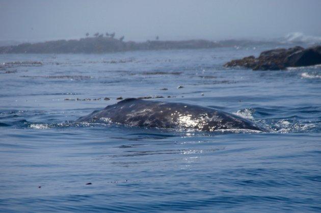 Walvis naast de boot