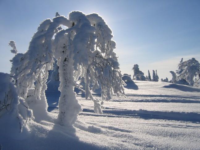 sneeuwsculpturen door de natuur