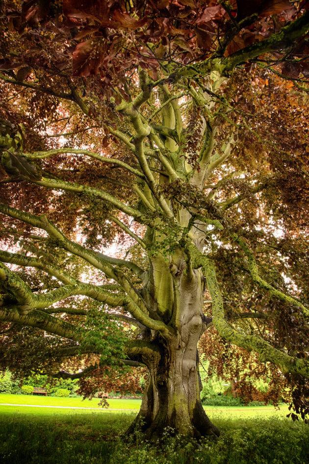 Als deze boom vertellen kon...