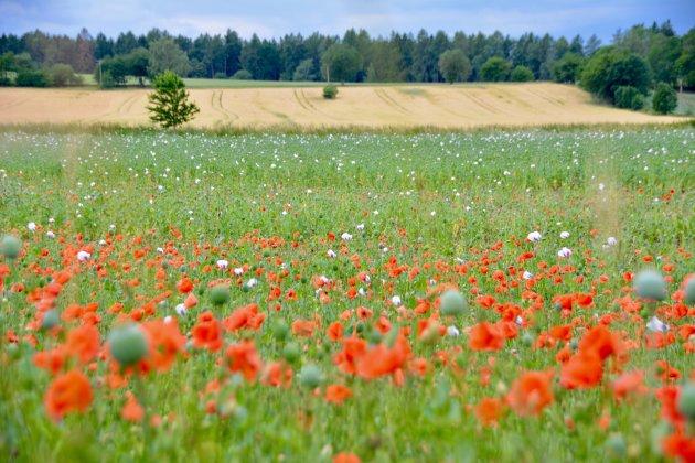 Tsjechische platteland