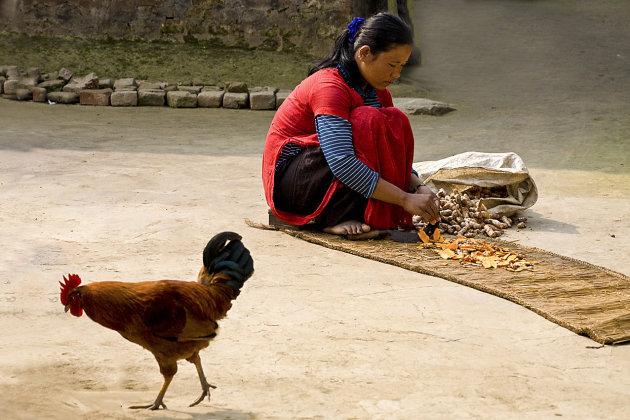 Vrouw met kip