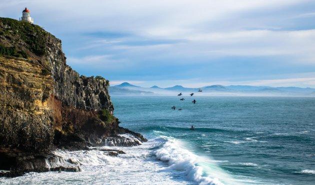 Albatrossen spotten op de Otago Peninsula