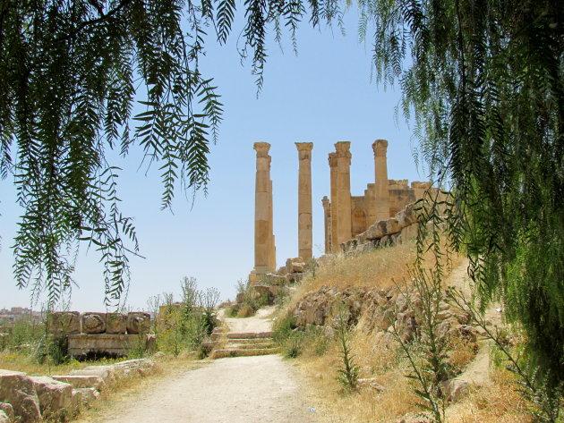 tempel van Zeus omlijst door peper