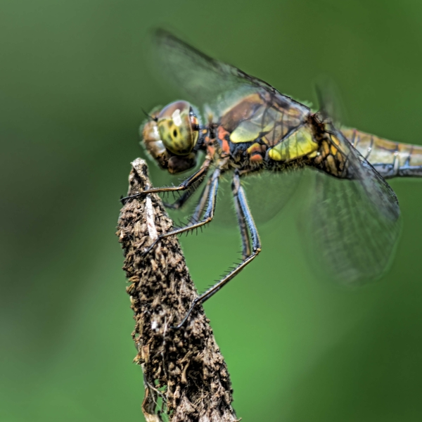 '563049' door Dragonfly