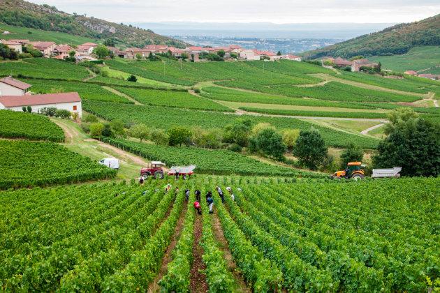 Harvest Frankrijk