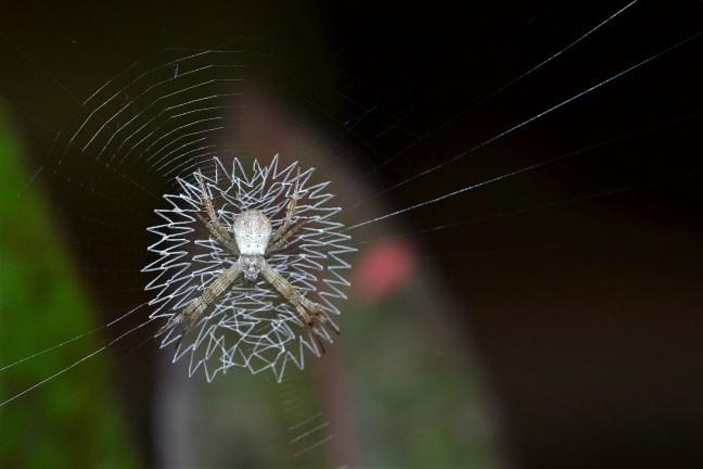 Het betere spinnenwerk