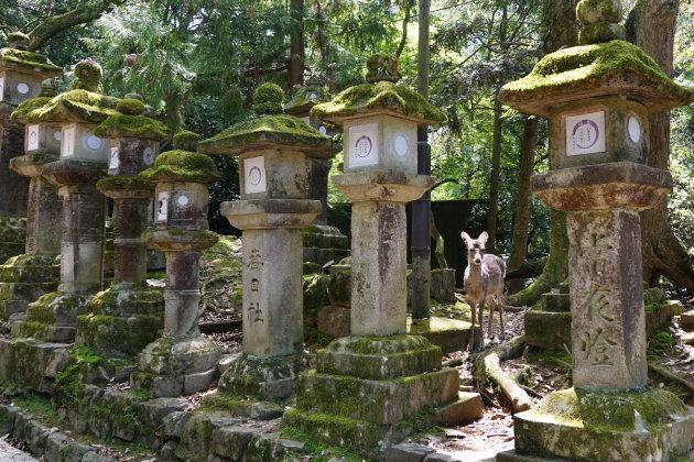 Heilig hert in Nara