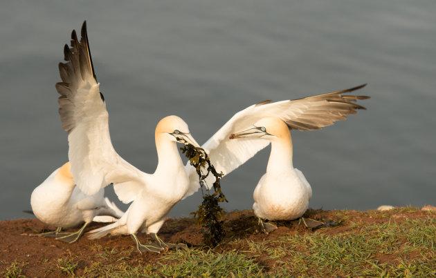 Samen een nestje bouwen