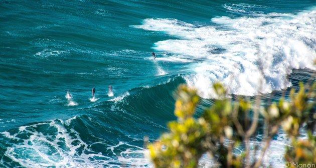 Surfende dolfijnen in Byron Bay