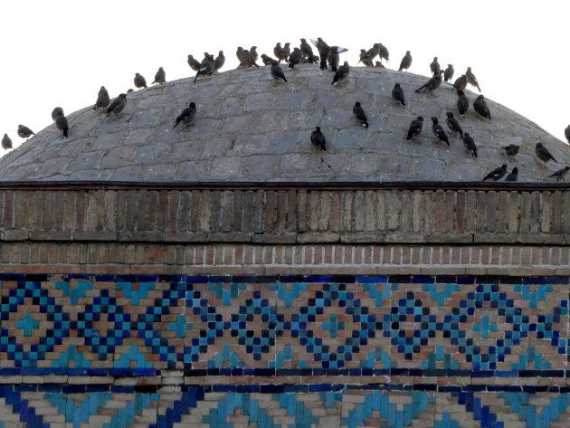 maina's op dak