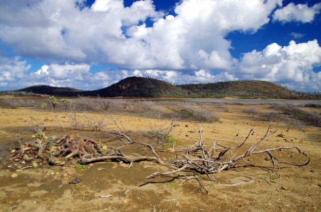 De aride landschappen van Bonaire