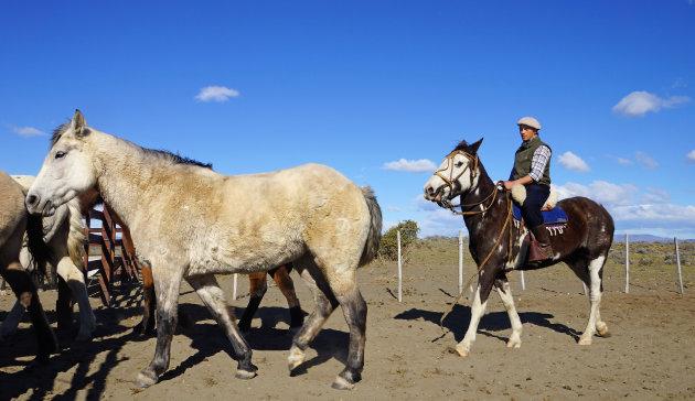 Paardrijden op de pampa