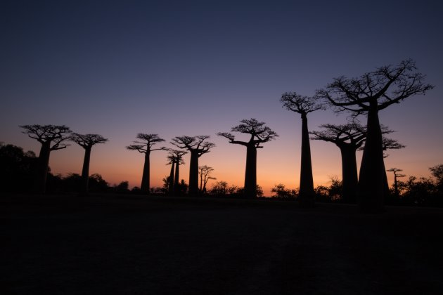 Baobablaan3