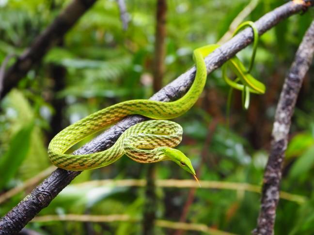 jungletocht Sinharaja Rainforest