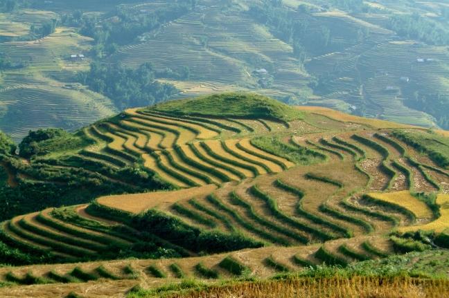 Lijntjeslandschap Noord Vietnam