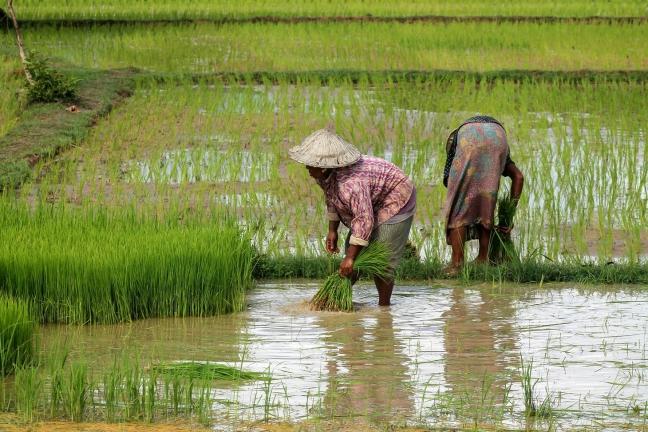 Traditioneel Laotiaans Leven op Don Khon