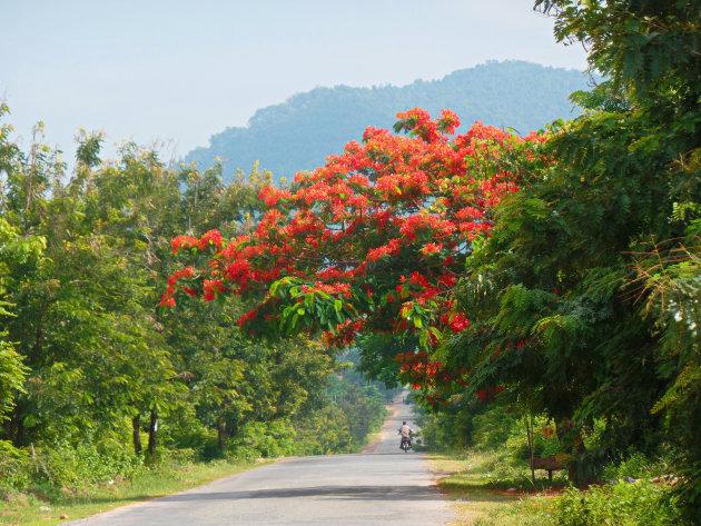 Prachtige natuur in Kampot