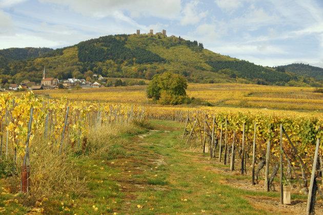 Route des Vin d'Alsace