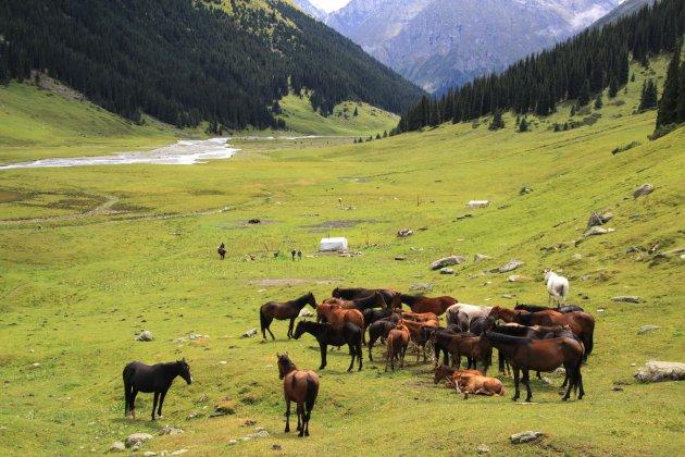Nomaden in Altyn Arashan