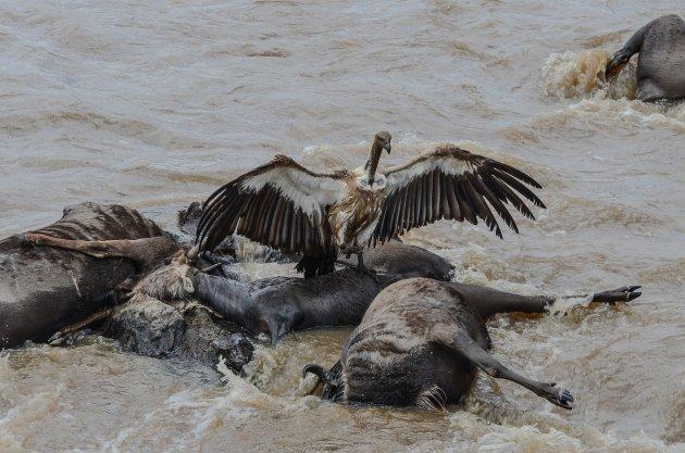 Snacktime bij de Mara-rivier