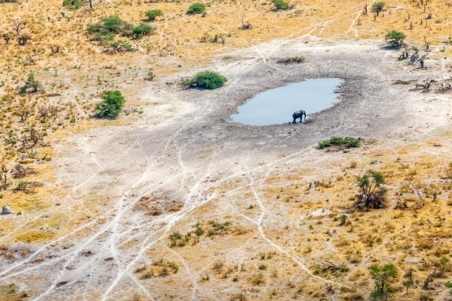 Eenzame olifant lest zijn dorst