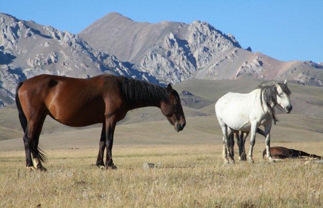 Paardrijden bij Song kul