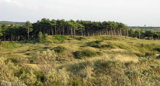 Aan het begin van mijn fotografie- Ruwe natuur in Kennemerland