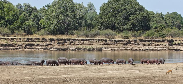Luangwa River III